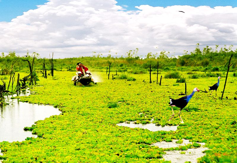 du lịch sinh thái vườn quốc gia U Minh Thượng, Kiên Giang