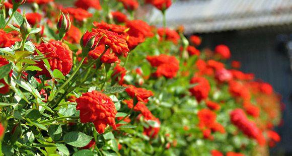 dã ngoại cuối tuần làng hoa kiểng Sa Đéc Đồng Tháp