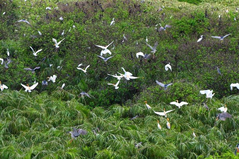 Du lịch Cà Mau- khám phá vẻ đẹp hoang sơ vườn chim của vùng đất mũi