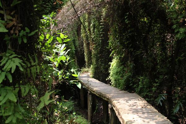 những địa điểm du lịch sinh thái cuối tuần ở Đồng Tháp.