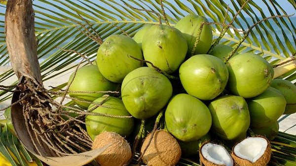 Những món ngon đặc sản nổi tiếng của xứ dừa Bến Tre