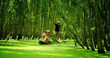 Cảnh đẹp rừng tràm mùa nước nổi