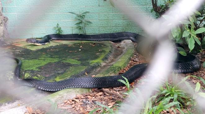 Tìm hiểu trại rắn Đồng Tâm