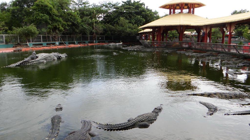 Vương quốc cá sấu Suối Tiên