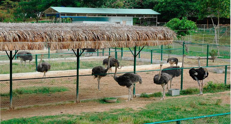 Khu tham quan vườn thú đồi Tức Rụp